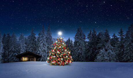TIGI Copyright – Gestylt unterm Weihnachtsbaum